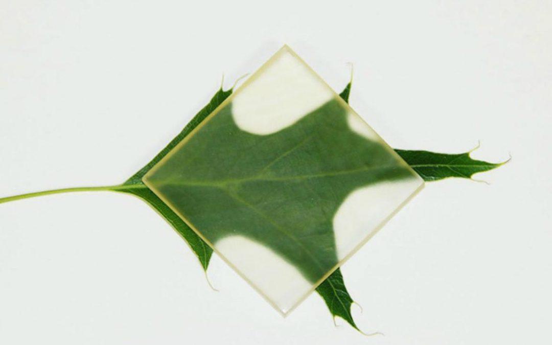 Kayu Transparan, Material Mutakhir Pengganti Kaca