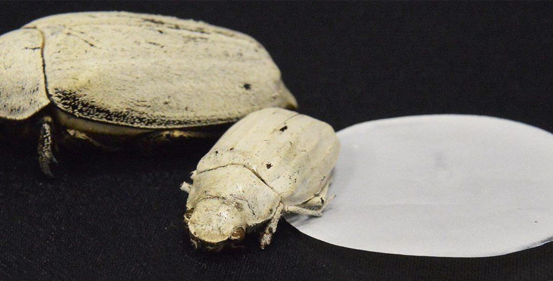 Cat Ultra-Putih Revolusioner yang Terinspirasi Oleh Kumbang
