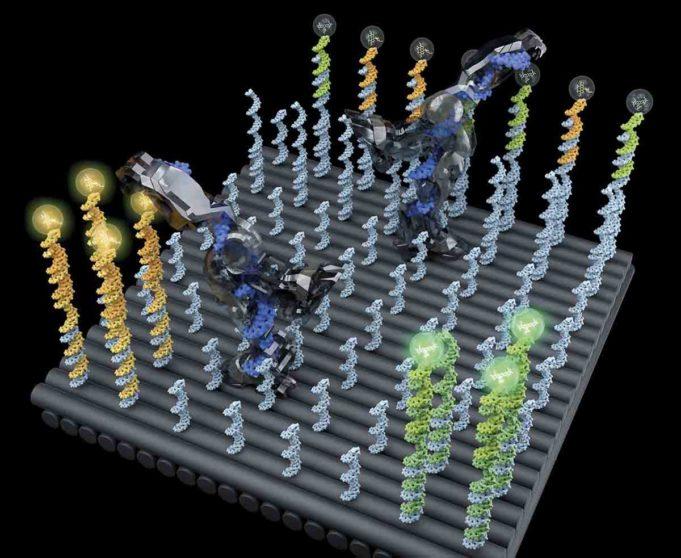 Mengurutkan Molekul Dengan Robot DNA