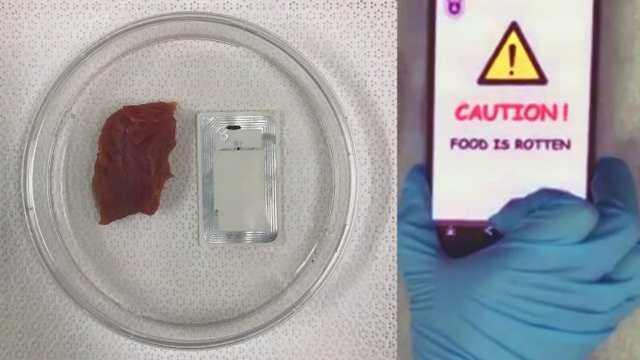Sensor Nirkabel Pendeteksi Kualitas Makanan
