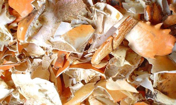 Pengolahan Limbah Cangkang Kepiting Menjadi Anti Hama Pertanian
