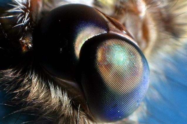 Antirefleksi Layar Smartphone yang Terinspirasi Mata Ngengat
