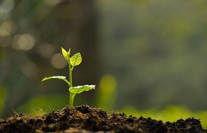 Pemanfaatan Nanoteknologi Untuk Melakukan Fotosintesis Buatan