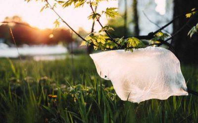Mikroba Pelumat yang Menangani Pencemaran Limbah Plastik