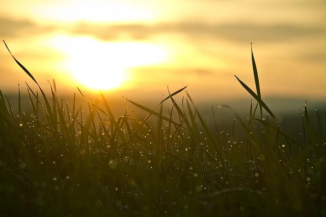 Fotosintesis Buatan Mengubah CO2 Menjadi Bahan Bakar Cair
